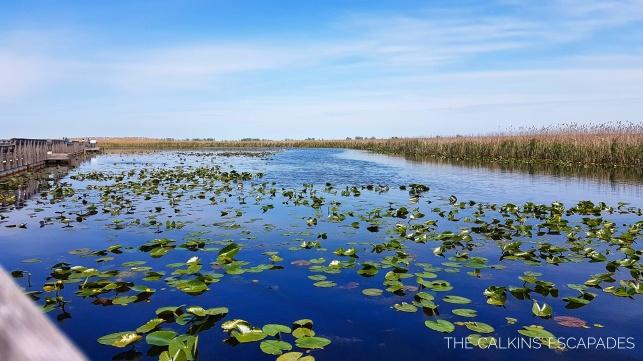 Point Pelee National Park boardwalk stroll through the marshlands